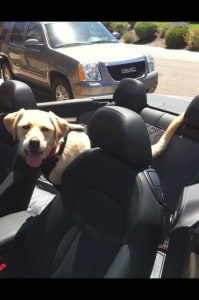 Murphy in the Audi