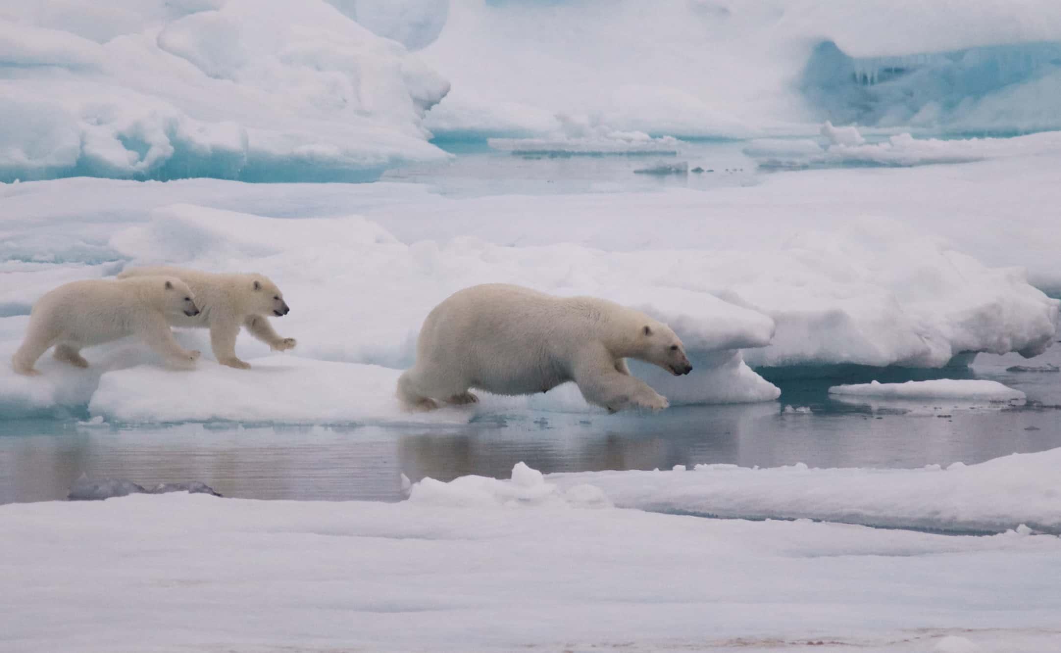 Iceland, Greenland & Svalbard!